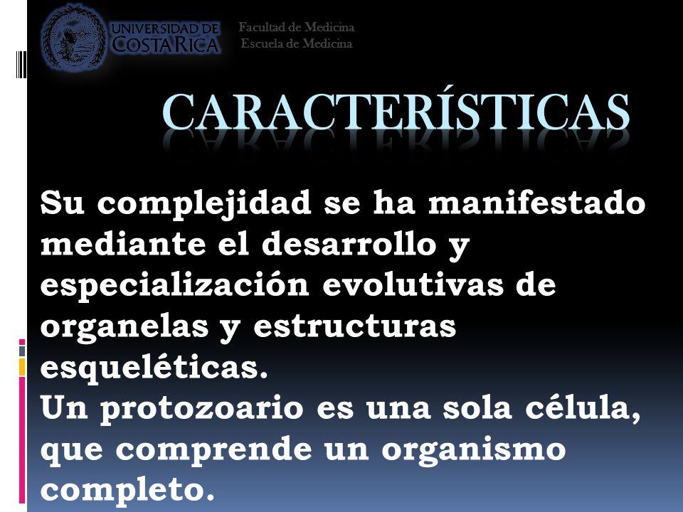 Su complejidad se ha manifestado mediante el desarrollo y especialización evolutivas de organelas y estructuras esqueléticas. Un protozoario es una so