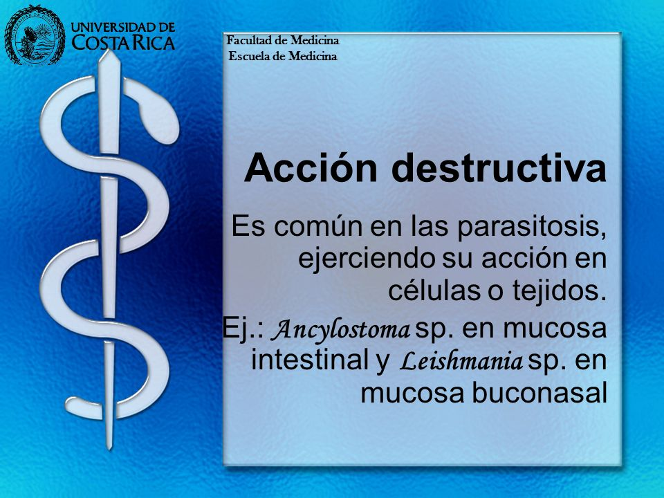 Acción destructiva Es común en las parasitosis, ejerciendo su acción en células o tejidos. Ej.: Ancylostoma sp. en mucosa intestinal y Leishmania sp.