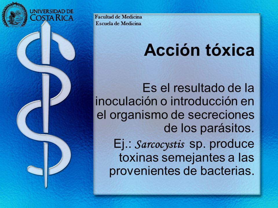 Acción tóxica Es el resultado de la inoculación o introducción en el organismo de secreciones de los parásitos. Ej.: Sarcocystis sp. produce toxinas s