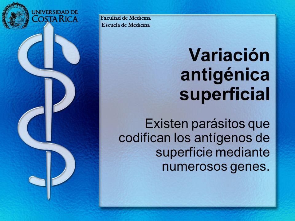 Variación antigénica superficial Existen parásitos que codifican los antígenos de superficie mediante numerosos genes. Facultad de Medicina Escuela de