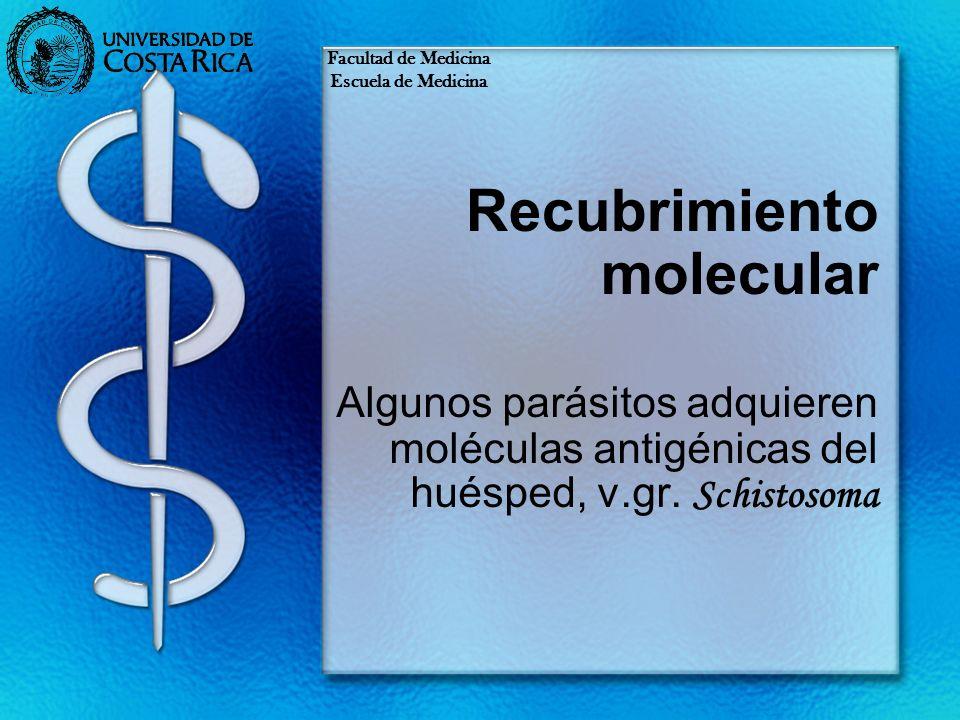 Recubrimiento molecular Algunos parásitos adquieren moléculas antigénicas del huésped, v.gr. Schistosoma Facultad de Medicina Escuela de Medicina