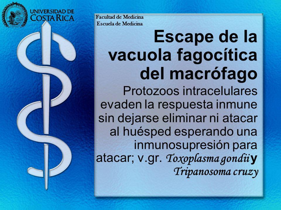 Escape de la vacuola fagocítica del macrófago Protozoos intracelulares evaden la respuesta inmune sin dejarse eliminar ni atacar al huésped esperando