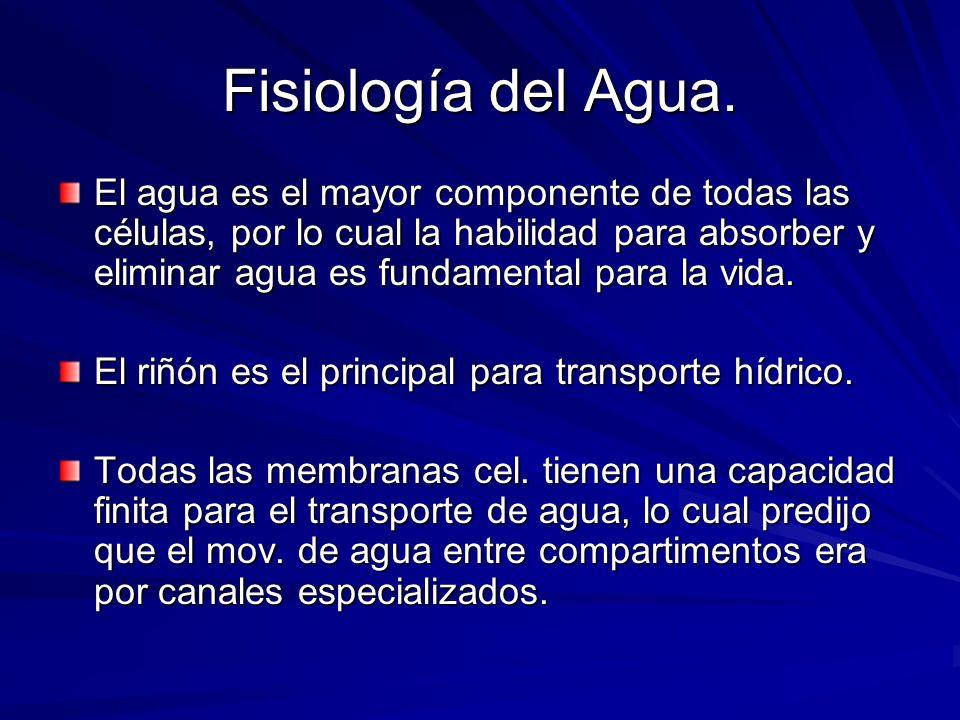 Fisiología del Agua. El agua es el mayor componente de todas las células, por lo cual la habilidad para absorber y eliminar agua es fundamental para l