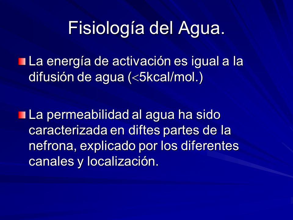 Fisiología del Agua. La energía de activación es igual a la difusión de agua ( 5kcal/mol.) La permeabilidad al agua ha sido caracterizada en diftes pa