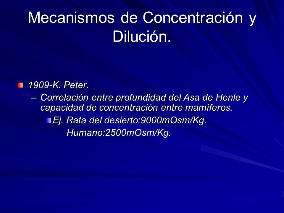 Mecanismos de Concentración y Dilución. 1909-K. Peter. –Correlación entre profundidad del Asa de Henle y capacidad de concentración entre mamíferos. E
