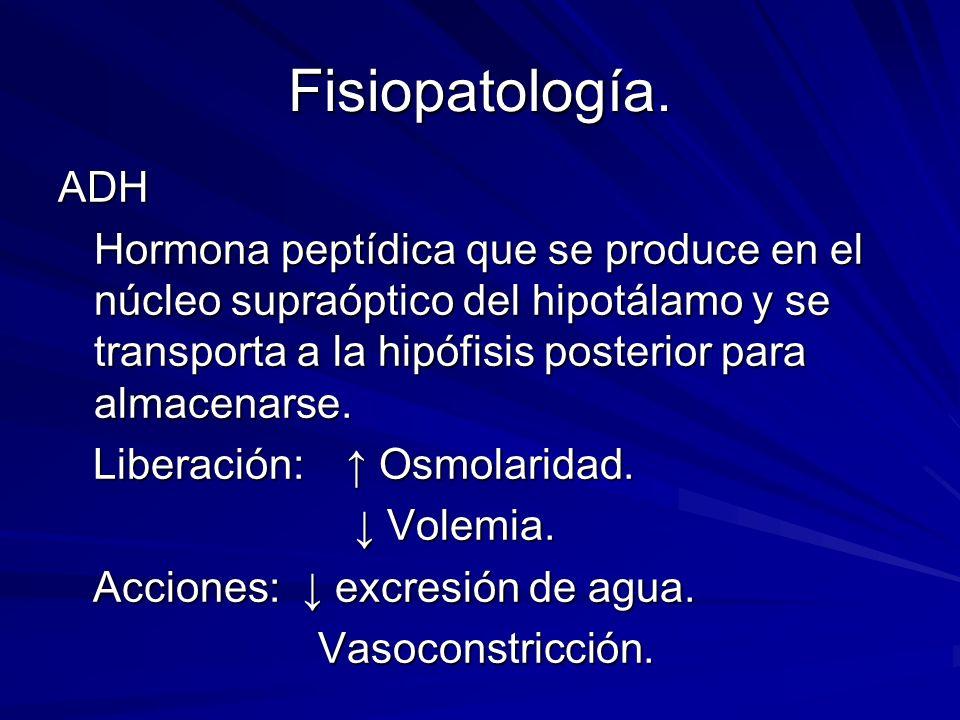 Fisiopatología. ADH Hormona peptídica que se produce en el núcleo supraóptico del hipotálamo y se transporta a la hipófisis posterior para almacenarse