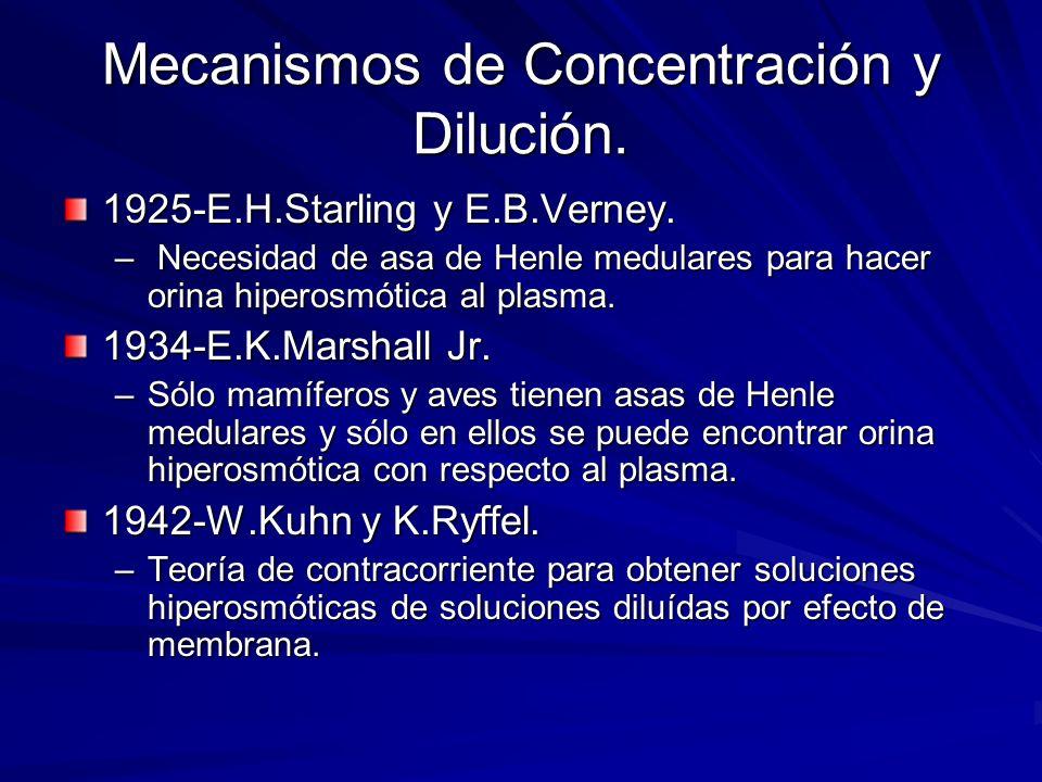 Mecanismos de Concentración y Dilución. 1925-E.H.Starling y E.B.Verney. – Necesidad de asa de Henle medulares para hacer orina hiperosmótica al plasma
