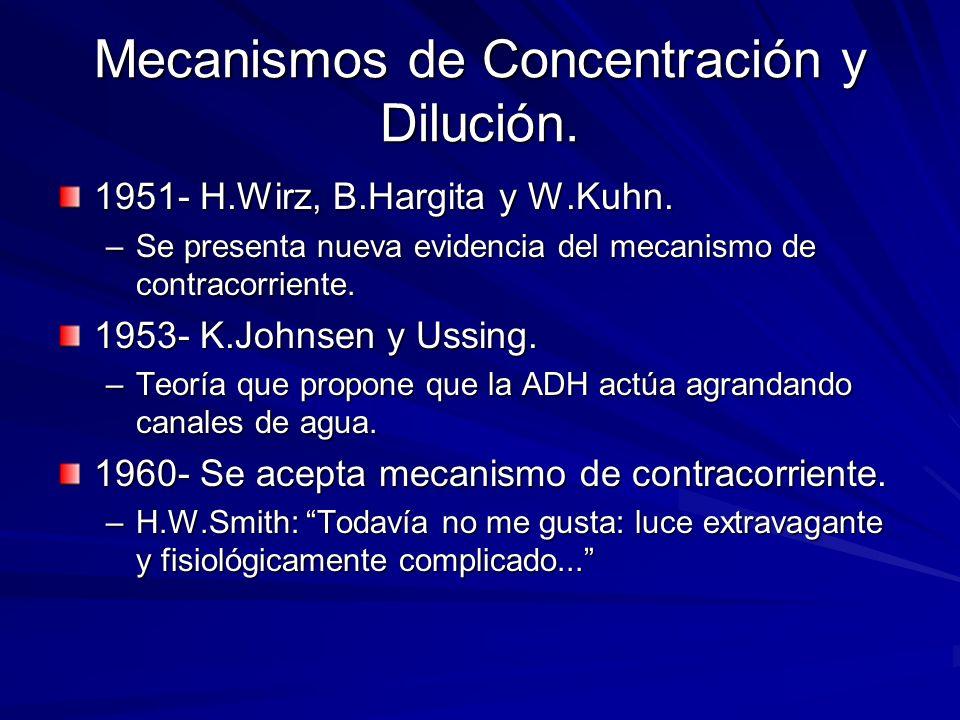 Mecanismos de Concentración y Dilución. 1951- H.Wirz, B.Hargita y W.Kuhn. –Se presenta nueva evidencia del mecanismo de contracorriente. 1953- K.Johns