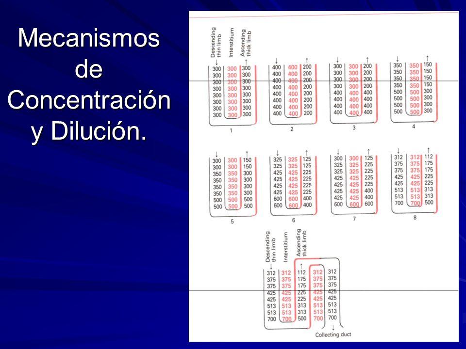 Mecanismos de Concentración y Dilución.