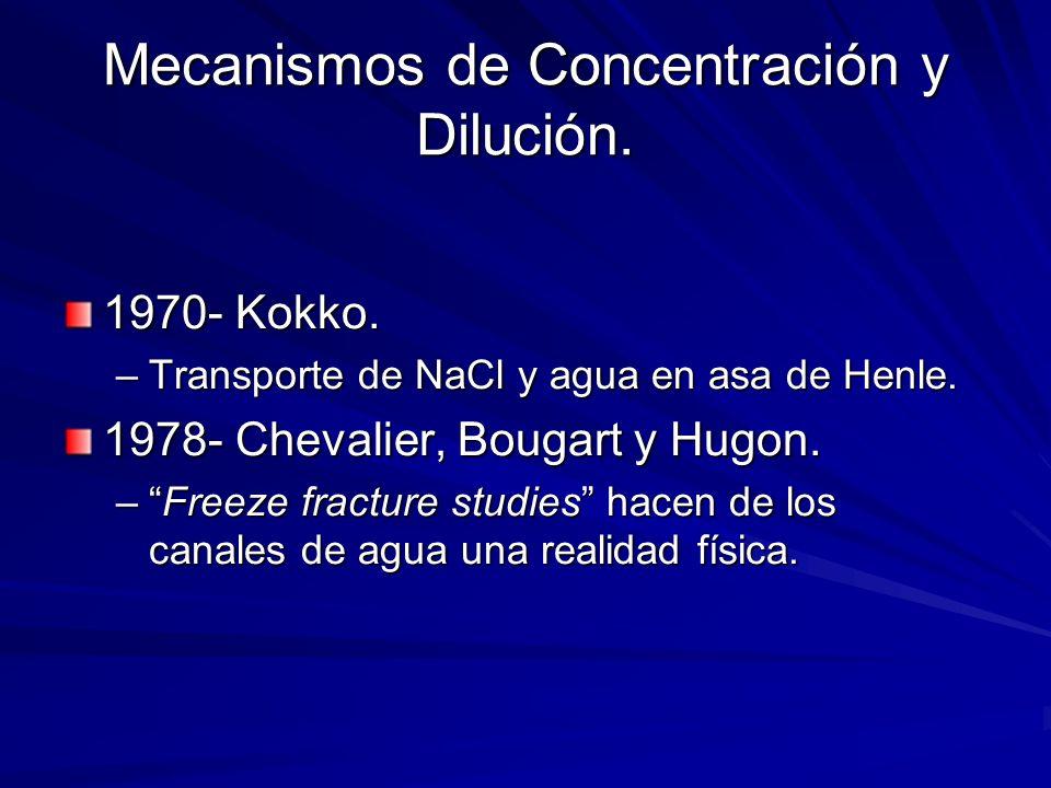 Mecanismos de Concentración y Dilución. 1970- Kokko. –Transporte de NaCl y agua en asa de Henle. 1978- Chevalier, Bougart y Hugon. –Freeze fracture st