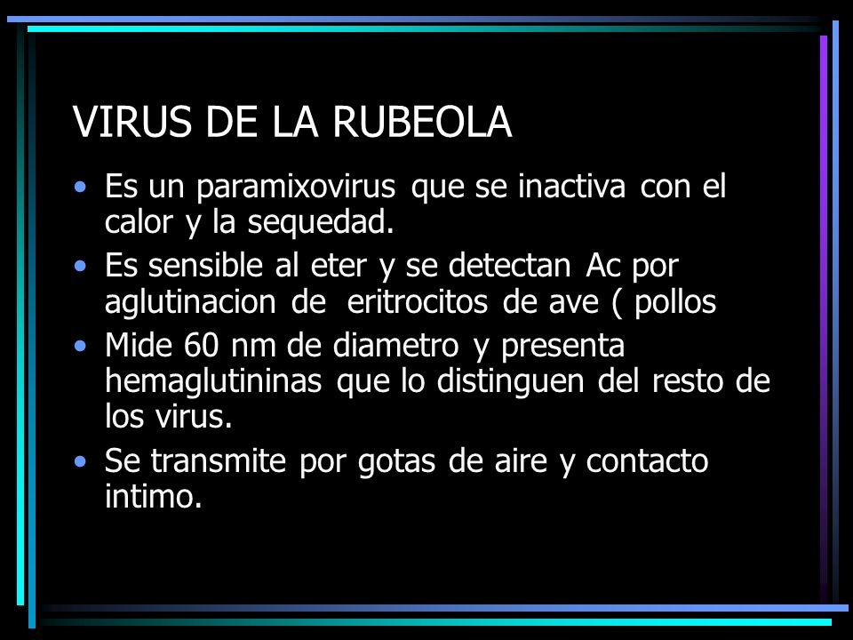 VIRUS DE LA RUBEOLA Es un paramixovirus que se inactiva con el calor y la sequedad. Es sensible al eter y se detectan Ac por aglutinacion de eritrocit