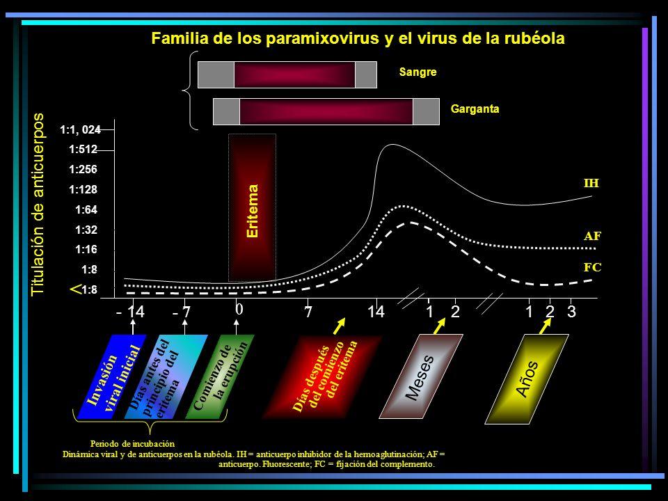 1:1, 024 1:512 1:256 1:128 1:64 1:32 1:16 1:8 Familia de los paramixovirus y el virus de la rubéola Virus presente Sangre Garganta Eritema Invasión vi