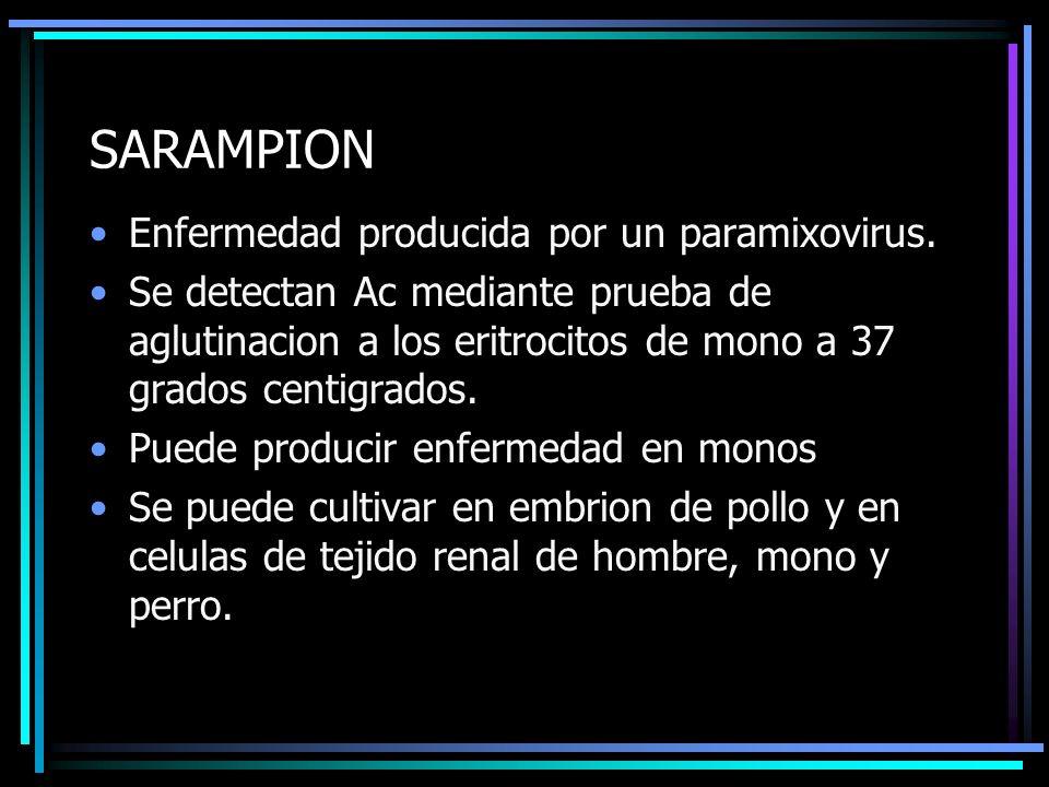 SARAMPION Enfermedad producida por un paramixovirus. Se detectan Ac mediante prueba de aglutinacion a los eritrocitos de mono a 37 grados centigrados.