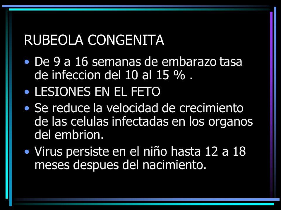 RUBEOLA CONGENITA De 9 a 16 semanas de embarazo tasa de infeccion del 10 al 15 %. LESIONES EN EL FETO Se reduce la velocidad de crecimiento de las cel