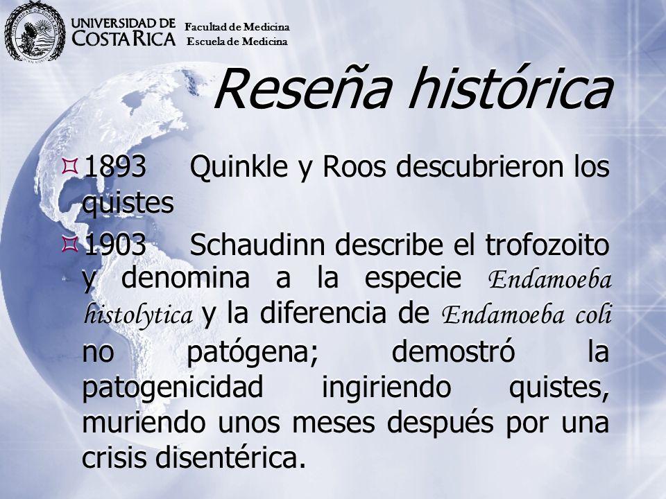 Reseña histórica 1893Quinkle y Roos descubrieron los quistes 1903Schaudinn describe el trofozoito y denomina a la especie Endamoeba histolytica y la d
