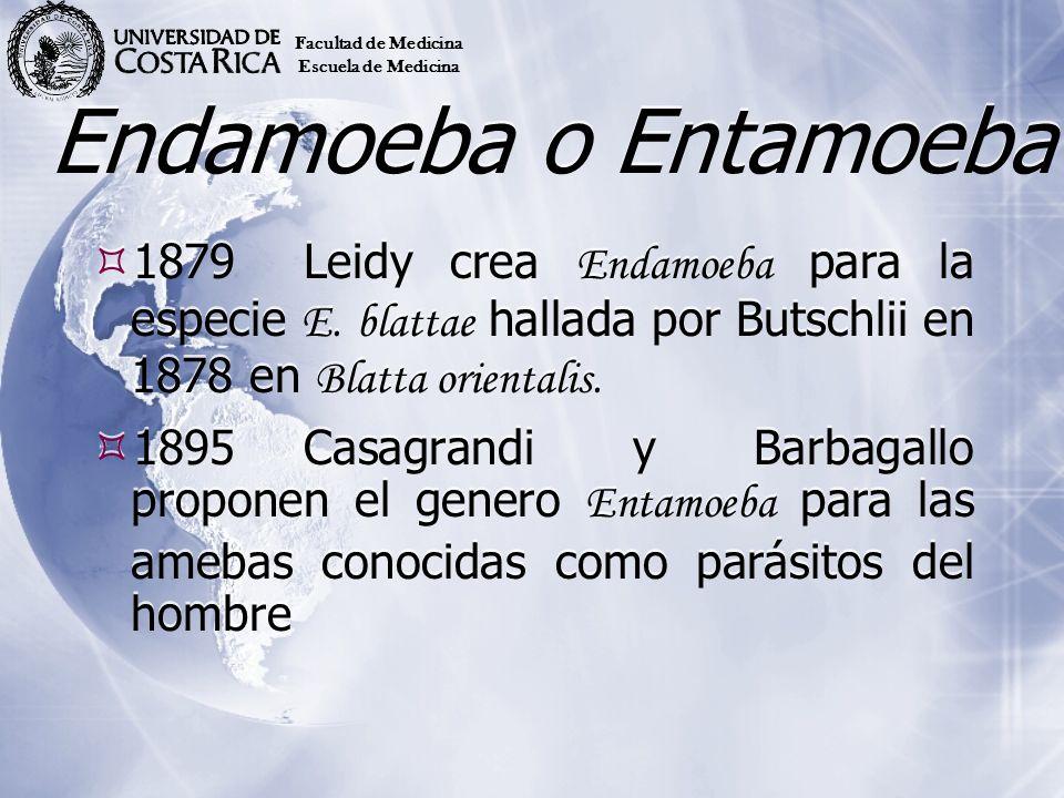 Endamoeba o Entamoeba 1879Leidy crea Endamoeba para la especie E. blattae hallada por Butschlii en 1878 en Blatta orientalis. 1895Casagrandi y Barbaga