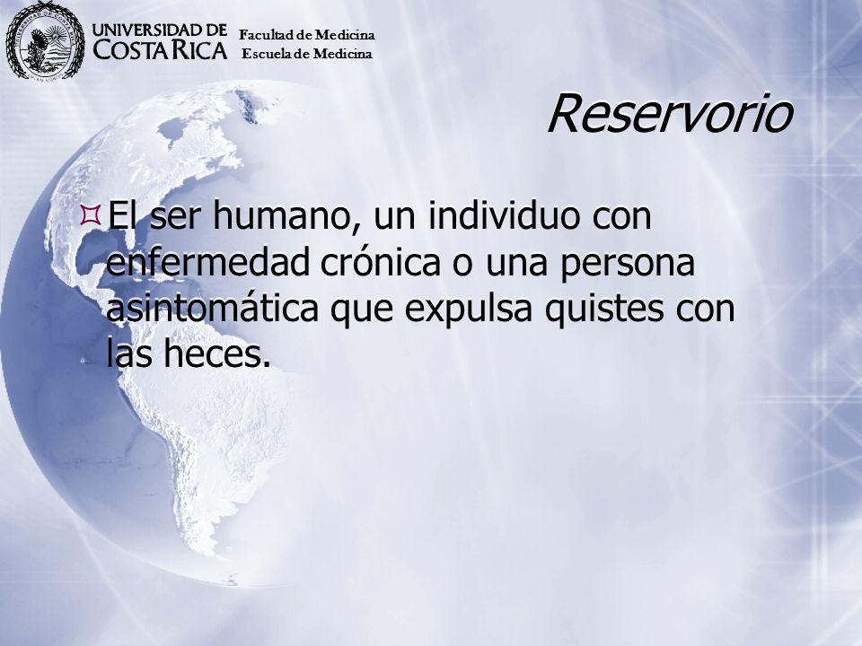 Reservorio El ser humano, un individuo con enfermedad crónica o una persona asintomática que expulsa quistes con las heces. Facultad de Medicina Escue