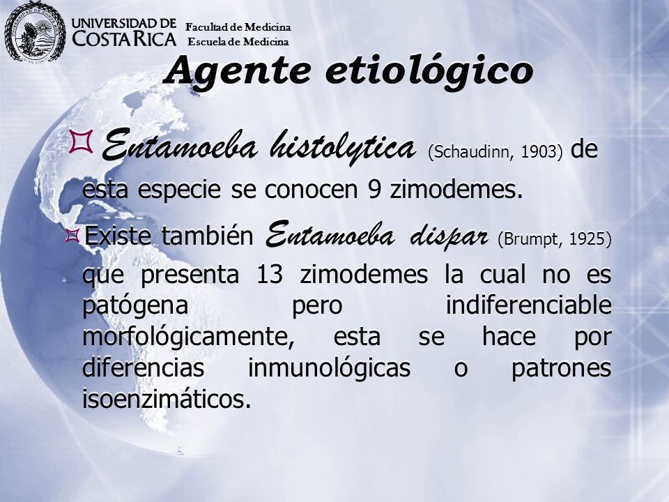 Agente etiológico Entamoeba histolytica (Schaudinn, 1903) de esta especie se conocen 9 zimodemes. Existe también Entamoeba dispar (Brumpt, 1925) que p