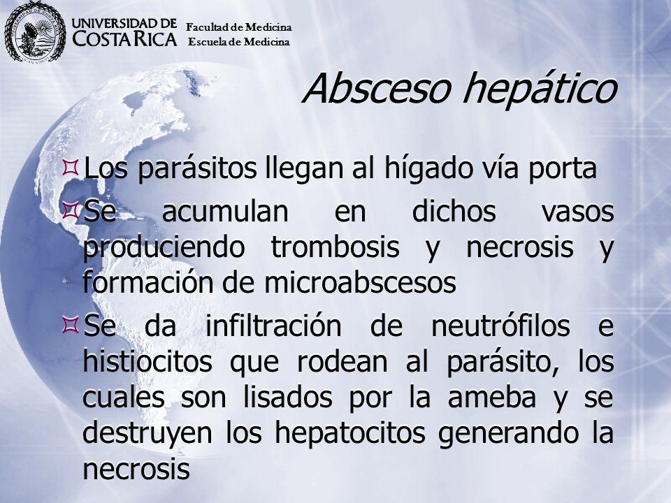 Absceso hepático Los parásitos llegan al hígado vía porta Se acumulan en dichos vasos produciendo trombosis y necrosis y formación de microabscesos Se
