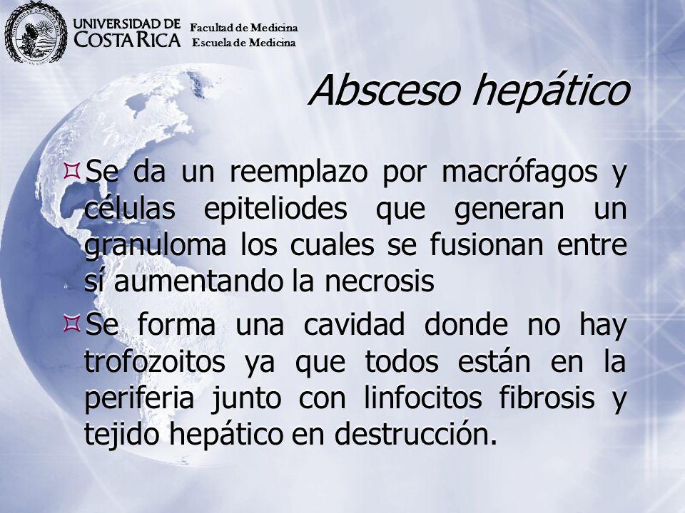 Absceso hepático Se da un reemplazo por macrófagos y células epiteliodes que generan un granuloma los cuales se fusionan entre sí aumentando la necros