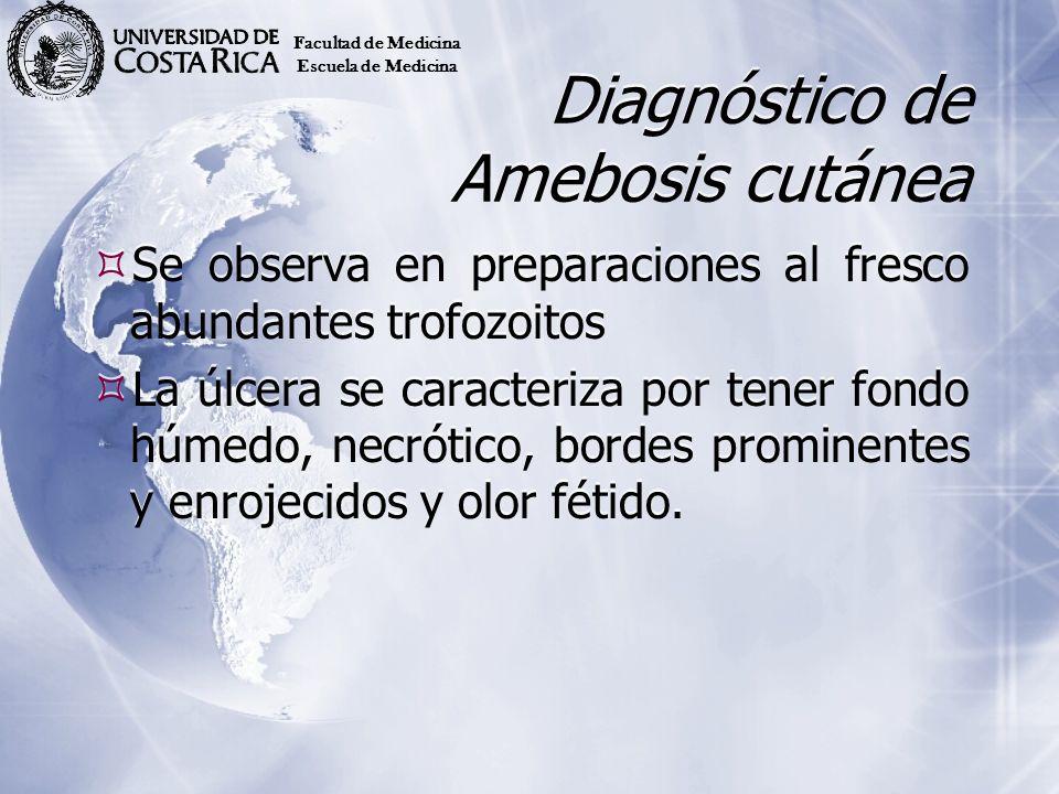 Diagnóstico de Amebosis cutánea Se observa en preparaciones al fresco abundantes trofozoitos La úlcera se caracteriza por tener fondo húmedo, necrótic