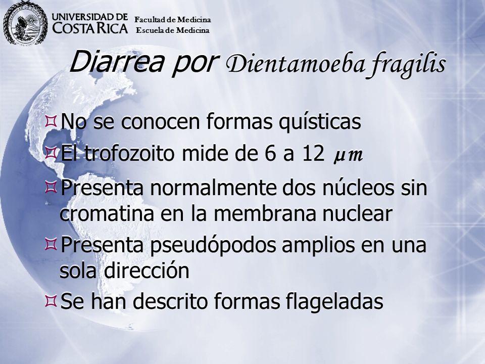 Diarrea por Dientamoeba fragilis No se conocen formas quísticas El trofozoito mide de 6 a 12 µm Presenta normalmente dos núcleos sin cromatina en la m