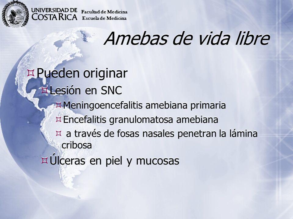 Amebas de vida libre Pueden originar Lesión en SNC Meningoencefalitis amebiana primaria Encefalitis granulomatosa amebiana a través de fosas nasales p