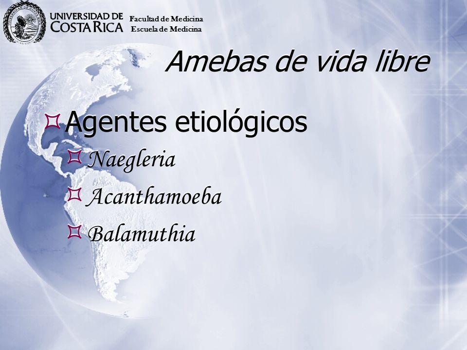 Amebas de vida libre Agentes etiológicos Naegleria Acanthamoeba Balamuthia Agentes etiológicos Naegleria Acanthamoeba Balamuthia Facultad de Medicina