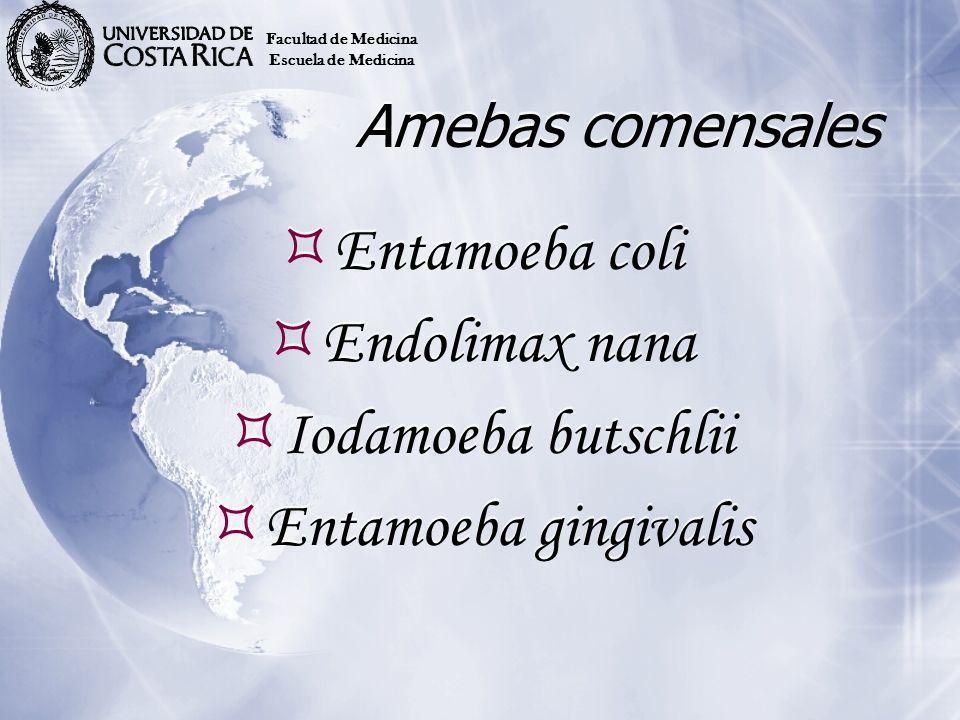 Amebas comensales Entamoeba coli Endolimax nana Iodamoeba butschlii Entamoeba gingivalis Entamoeba coli Endolimax nana Iodamoeba butschlii Entamoeba g