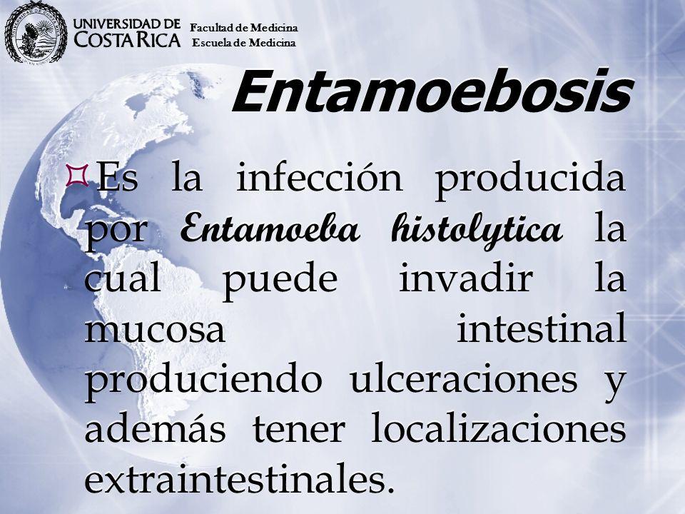 Entamoeba histolytica, también puede vivir como comensal en el intestino grueso.
