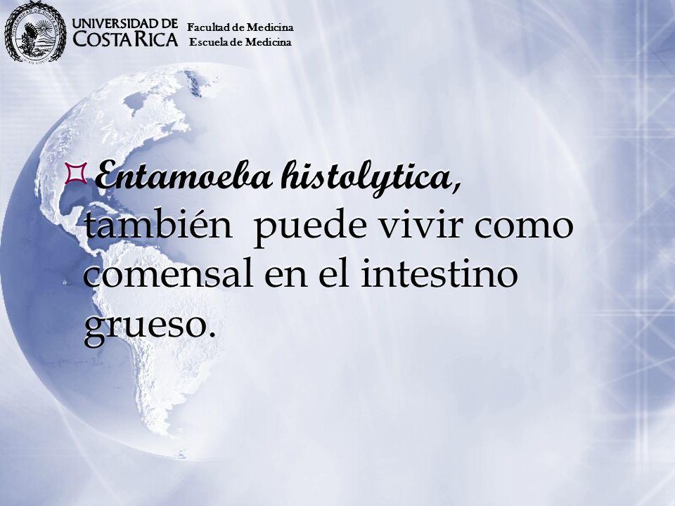 Entamoeba histolytica, también puede vivir como comensal en el intestino grueso. Facultad de Medicina Escuela de Medicina