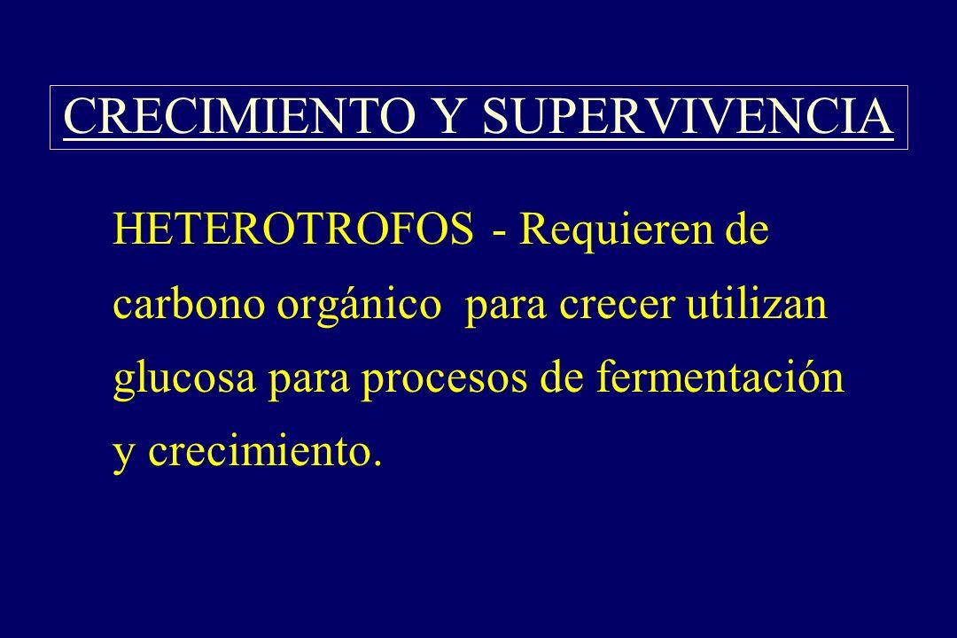CRECIMIENTO Y SUPERVIVENCIA §HETEROTROFOS - Requieren de carbono orgánico para crecer utilizan glucosa para procesos de fermentación y crecimiento.