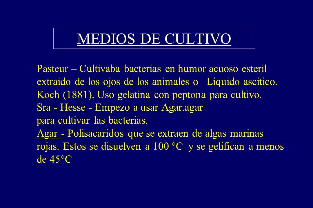MEDIOS DE CULTIVO §Pasteur – Cultivaba bacterias en humor acuoso esteril extraido de los ojos de los animales o Liquido ascitico. Koch (1881). Uso gel