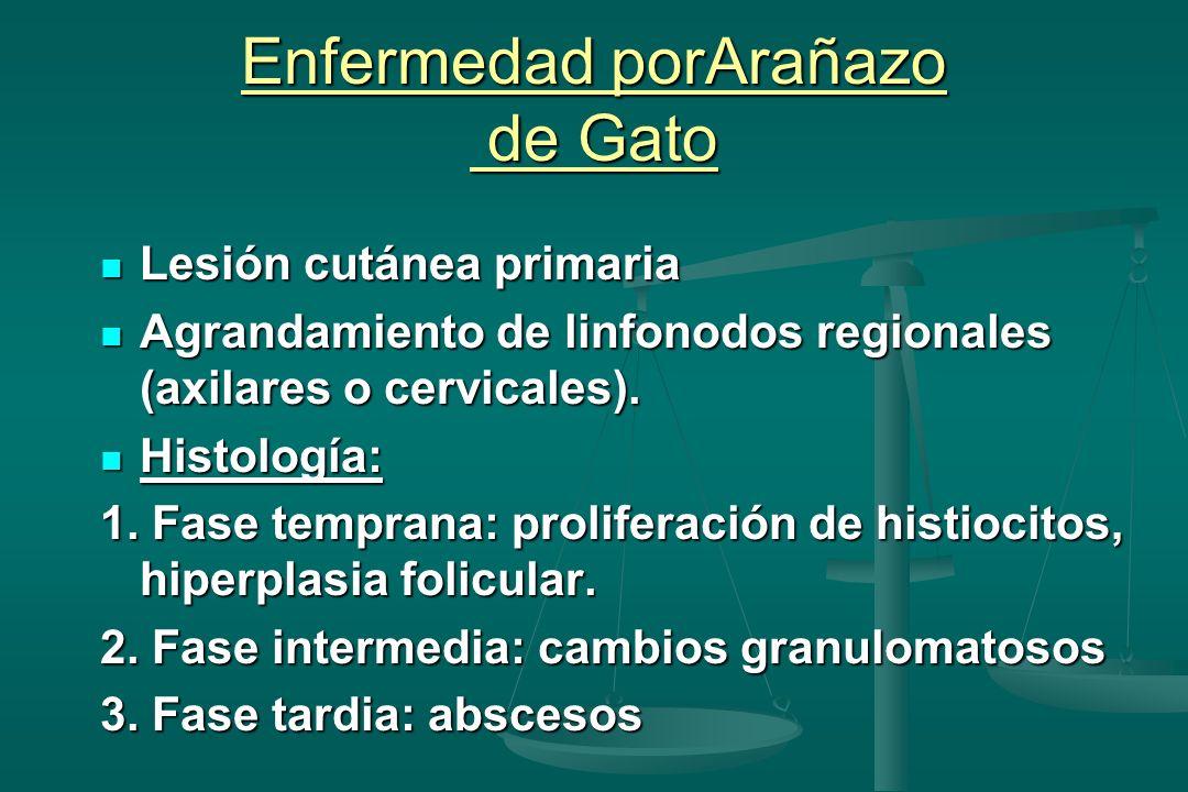 Enfermedad porArañazo de Gato Lesión cutánea primaria Lesión cutánea primaria Agrandamiento de linfonodos regionales (axilares o cervicales).