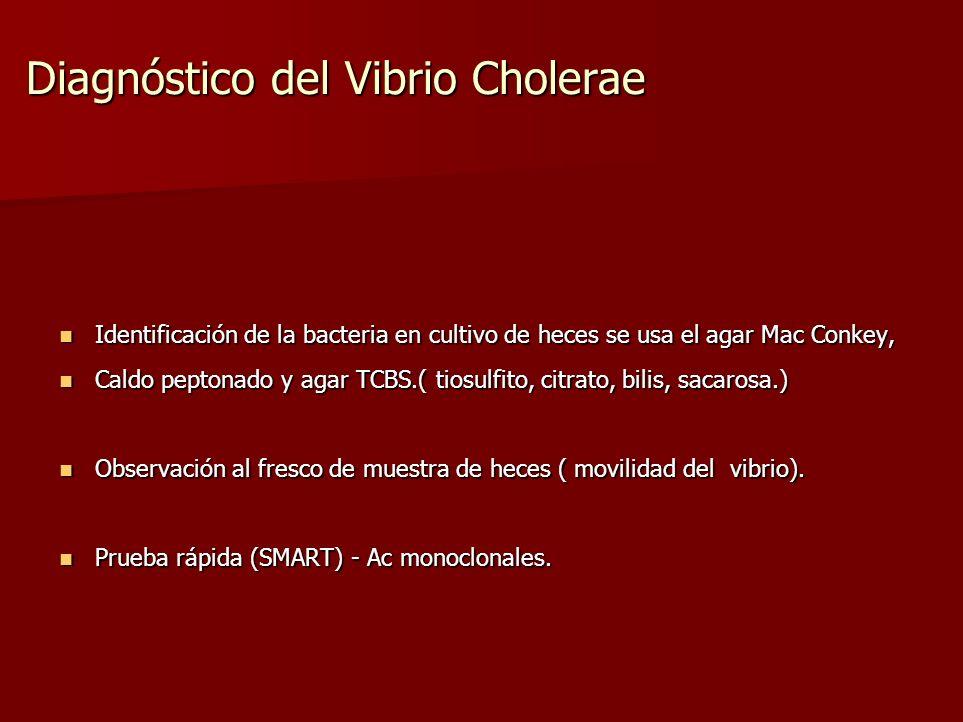 Diagnóstico del Vibrio Cholerae Identificación de la bacteria en cultivo de heces se usa el agar Mac Conkey, Identificación de la bacteria en cultivo