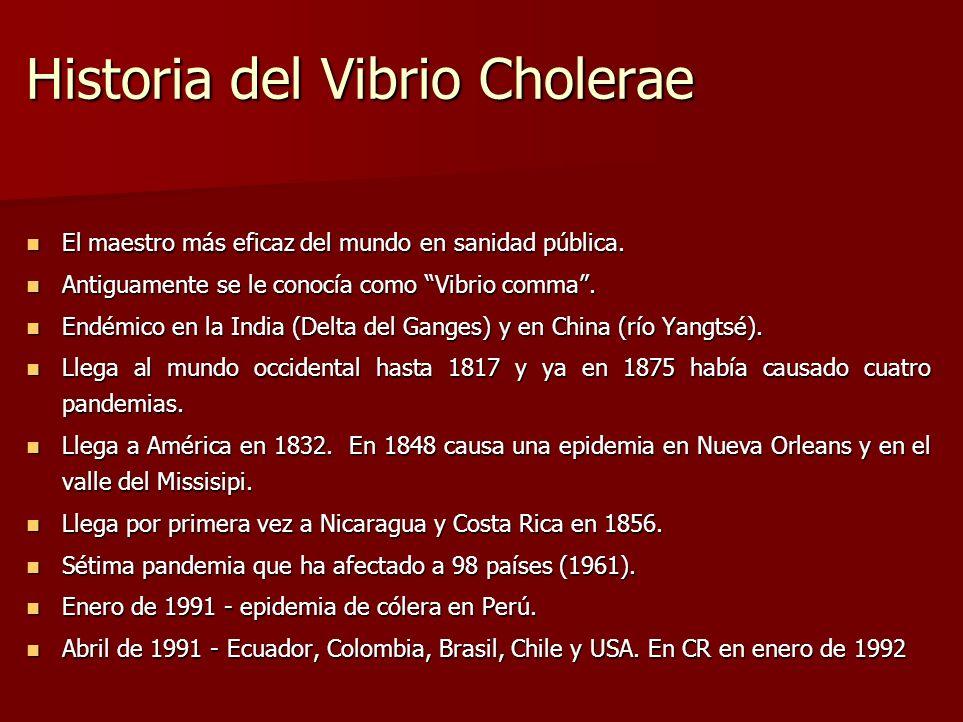 Historia del Vibrio Cholerae El maestro más eficaz del mundo en sanidad pública. El maestro más eficaz del mundo en sanidad pública. Antiguamente se l