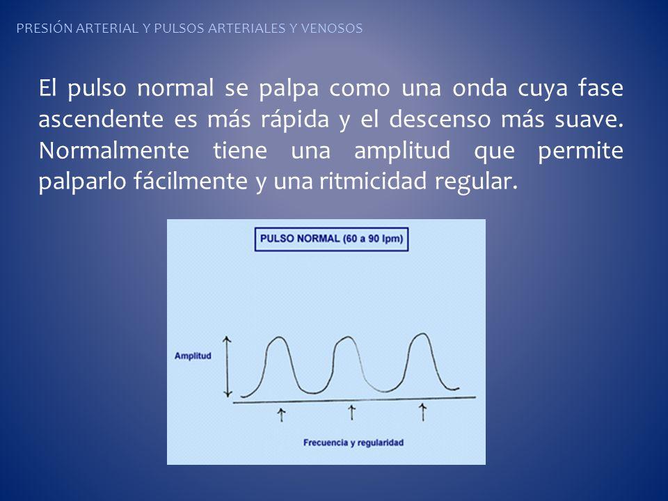 PRESIÓN ARTERIAL Y PULSOS ARTERIALES Y VENOSOS El pulso normal se palpa como una onda cuya fase ascendente es más rápida y el descenso más suave. Norm