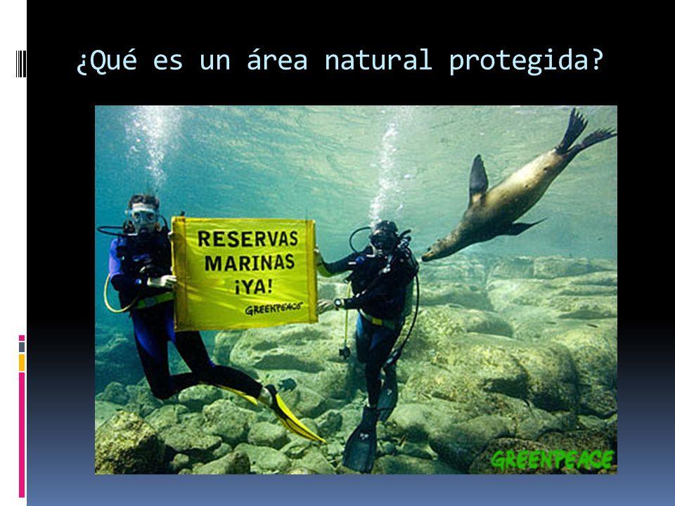 ¿Qué es un área natural protegida?