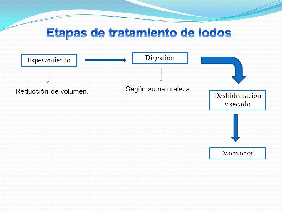Espesamiento Reducción de volumen. Digestión Según su naturaleza. Deshidratación y secado Evacuación