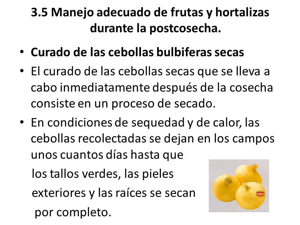 3.5 Manejo adecuado de frutas y hortalizas durante la postcosecha. Curado de las cebollas bulbiferas secas El curado de las cebollas secas que se llev