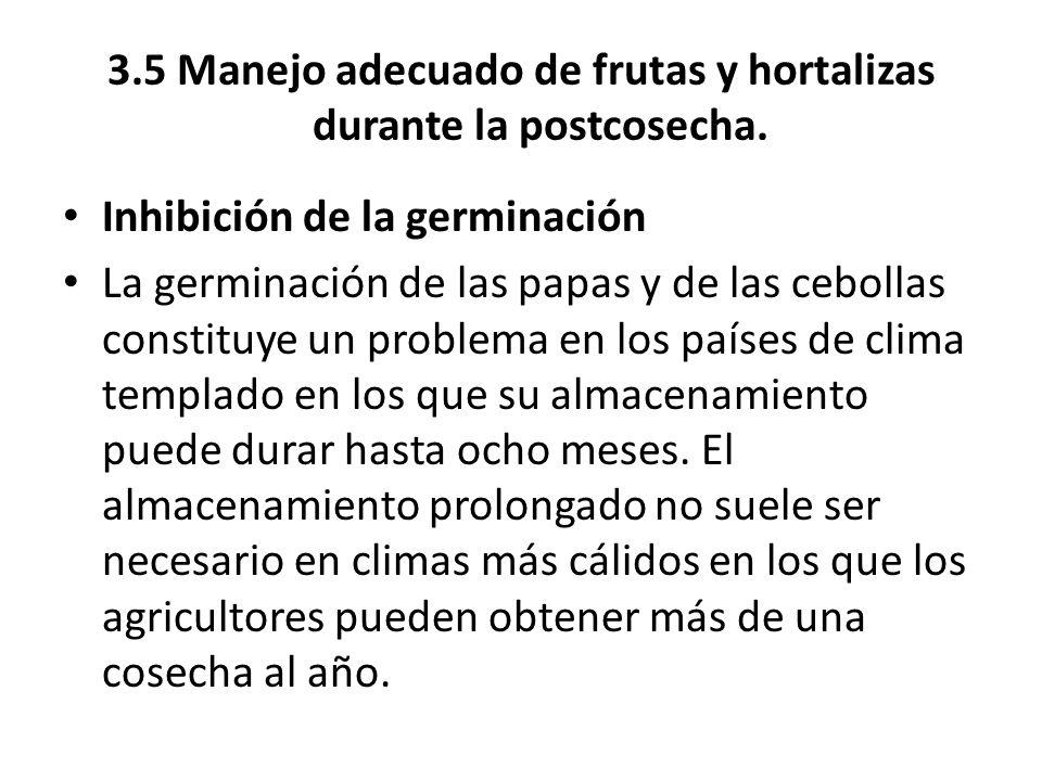 3.5 Manejo adecuado de frutas y hortalizas durante la postcosecha. Inhibición de la germinación La germinación de las papas y de las cebollas constitu