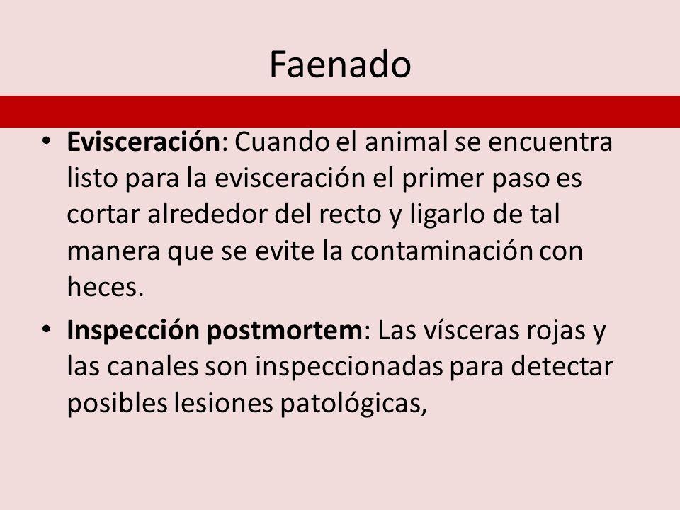 Faenado Evisceración: Cuando el animal se encuentra listo para la evisceración el primer paso es cortar alrededor del recto y ligarlo de tal manera qu