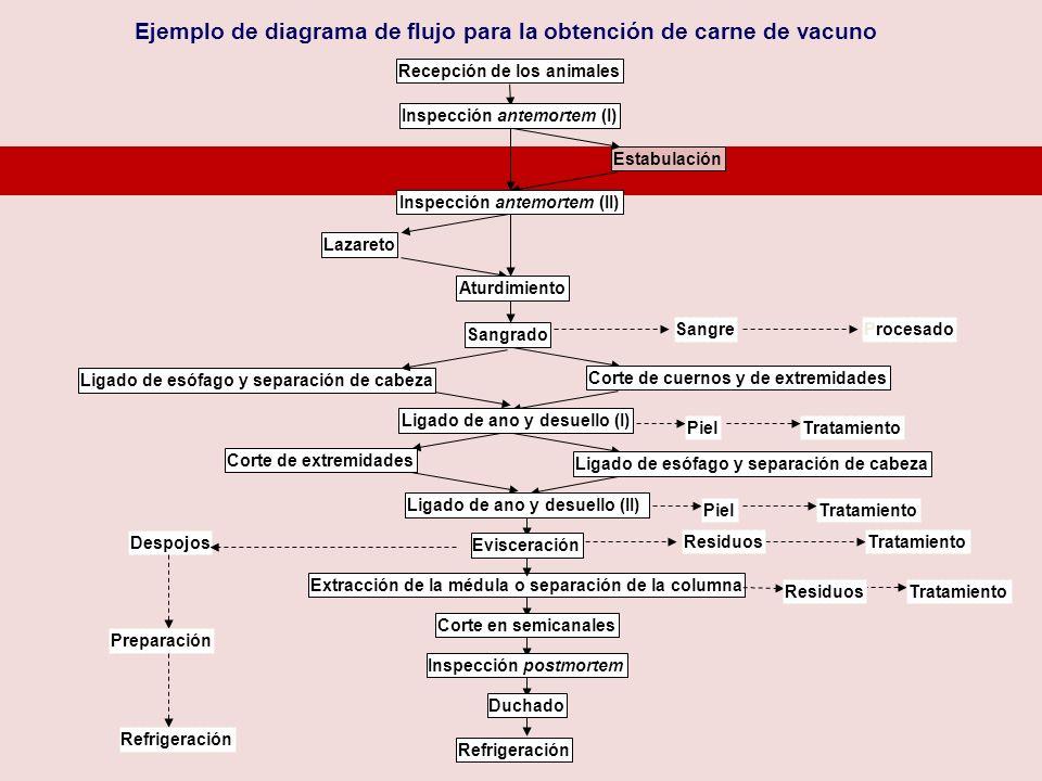 Ejemplo de diagrama de flujo para la obtención de carne de vacuno Estabulación Ligado de esófago y separación de cabeza Corte de extremidades Recepció