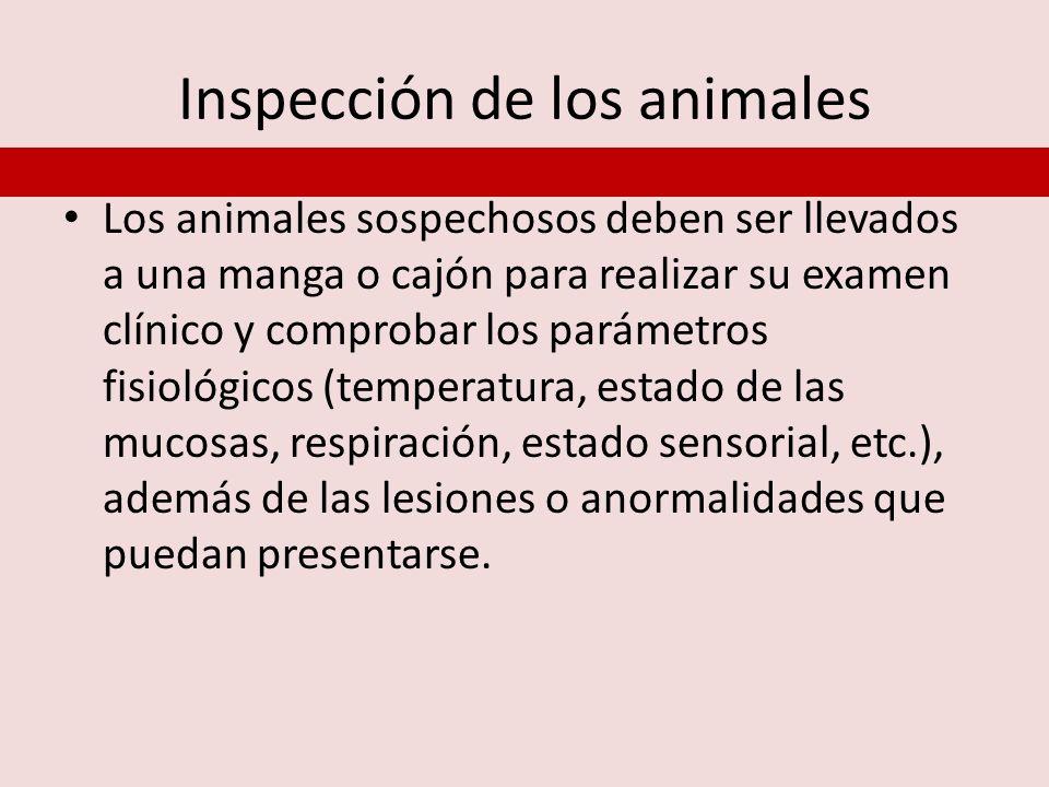 Inspección de los animales Los animales sospechosos deben ser llevados a una manga o cajón para realizar su examen clínico y comprobar los parámetros