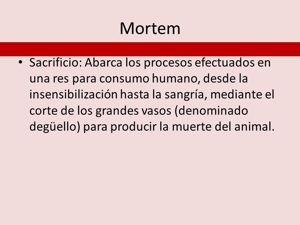 Mortem Sacrificio: Abarca los procesos efectuados en una res para consumo humano, desde la insensibilización hasta la sangría, mediante el corte de lo