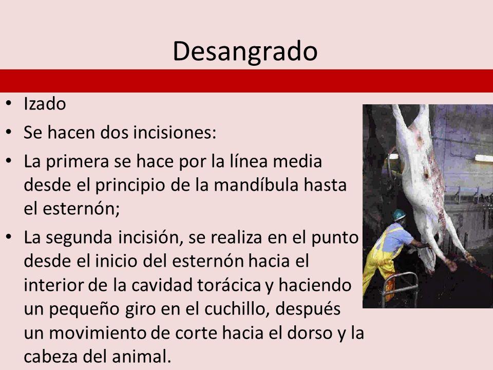 Postmortem, Faenado Faenado de Bovinos: Son las operaciones que se realizan en la res después del sacrificio y tienen como fin la separación de las diferentes partes del animal, para la obtención de la canal y subproductos.