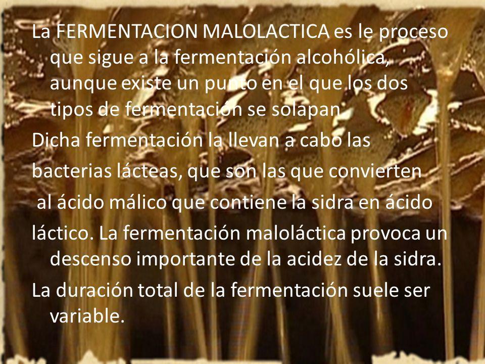 La FERMENTACION MALOLACTICA es le proceso que sigue a la fermentación alcohólica, aunque existe un punto en el que los dos tipos de fermentación se so