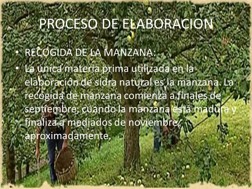 PROCESO DE ELABORACION RECOGIDA DE LA MANZANA: La única materia prima utilizada en la elaboración de sidra natural es la manzana. La recogida de manza