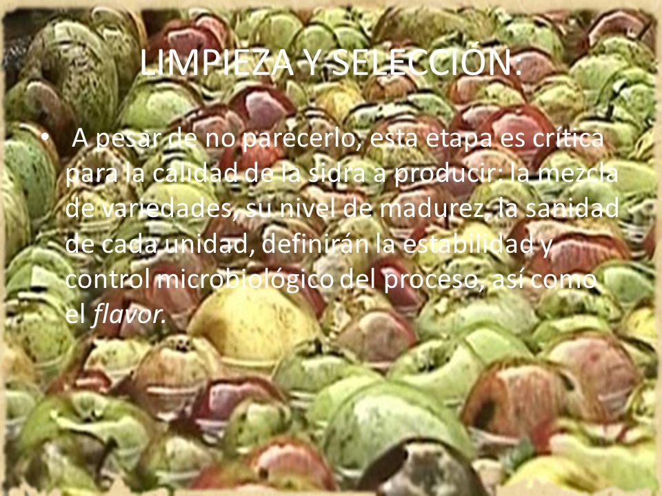 LIMPIEZA Y SELECCIÓN: A pesar de no parecerlo, esta etapa es crítica para la calidad de la sidra a producir: la mezcla de variedades, su nivel de madu