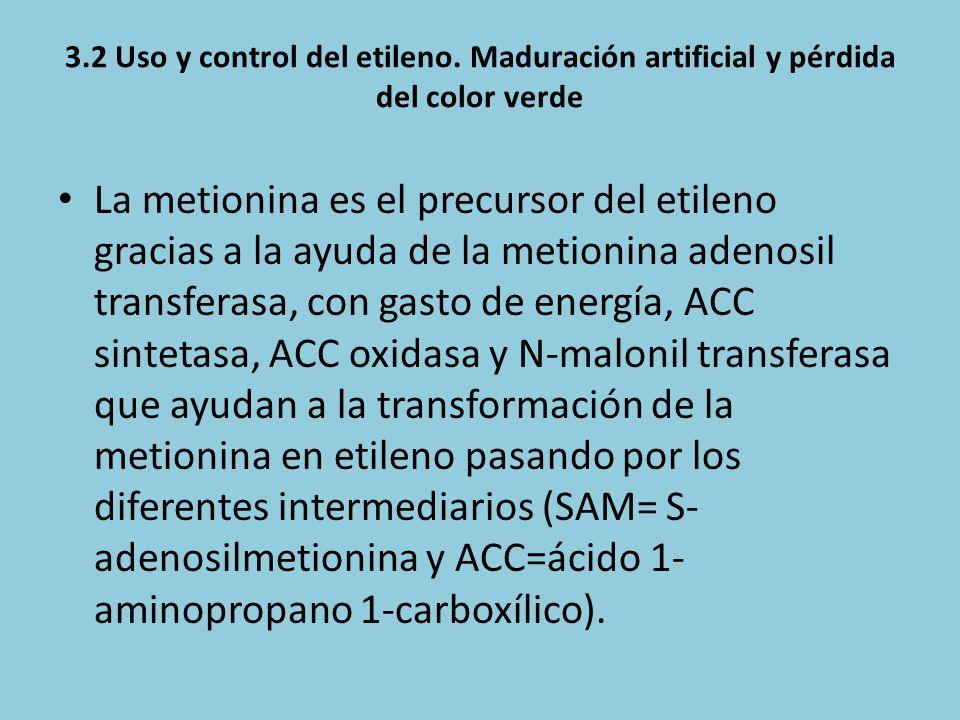 3.2 Uso y control del etileno. Maduración artificial y pérdida del color verde La metionina es el precursor del etileno gracias a la ayuda de la metio